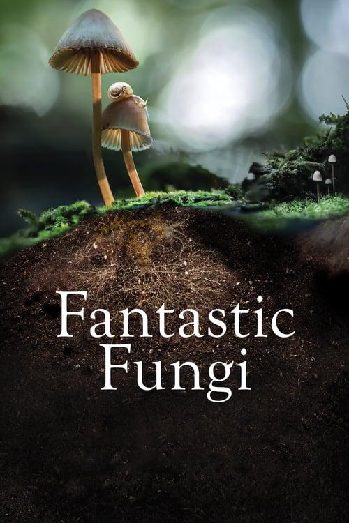 ดูหนังออนไลน์ฟรี [NETFLIX] Fantastic Fungi (2019) เห็ดมหัศจรรย์